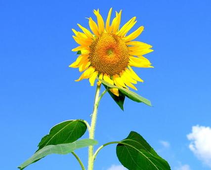 塑造陽光心態 成就快樂工作